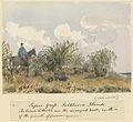 Edward Gennys Fanshawe, Tussac Grass, Falkland Islands.jpg