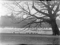 Eenden op het ijs en in een wak in het Vondelpark in Amsterdam, Bestanddeelnr 189-0064.jpg