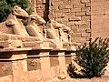 Egypt-3A-038 - Ram-headed Sphinxes (2216559543).jpg