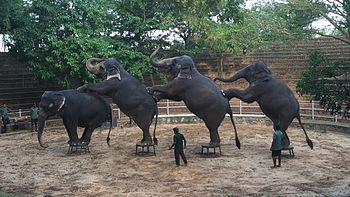Elephant.dance.jpg