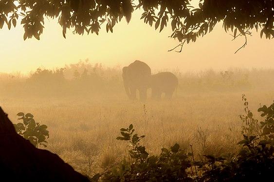 Elephants@JimCorbettNationalParkIndia.jpg
