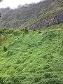 Entrée d'Hellbourg La Réunion.jpg