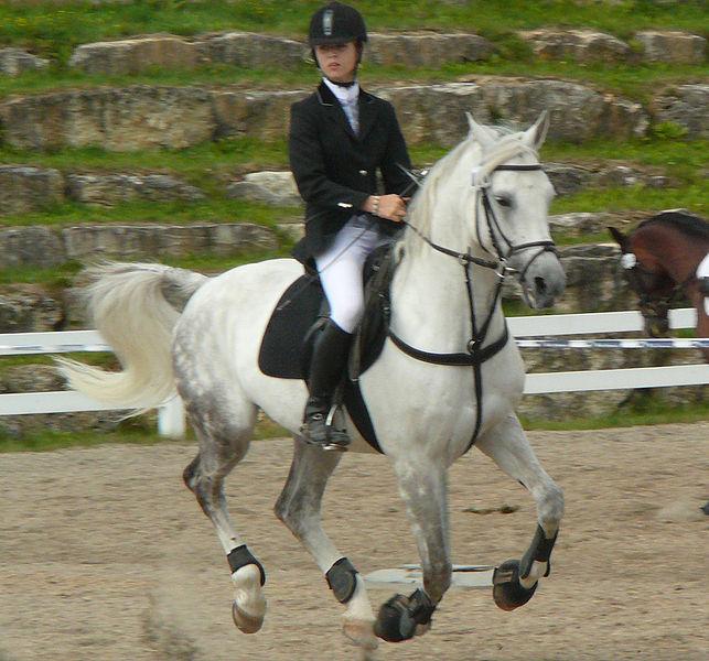 image accessoire cheval