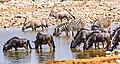 Etosha National Park (40321763833).jpg