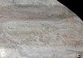Eurypterus young (8067897694).jpg