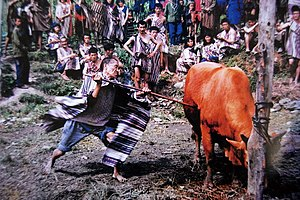 Derung people - Image: F.slaughter cattle to worship the god