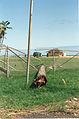 FEMA - 257 - Photograph by FEMA News Photo taken on 09-01-1992 in Hawaii.jpg