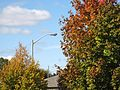 Fall 2009 (4008994121).jpg