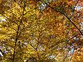 Fall Colors in Rock Creek Park - Flickr - treegrow (4).jpg