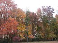 Fall colors in New Jersey suburban garden 20151031 171722.jpg