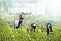 Farmville Dumangas, Iloilo 3.jpg