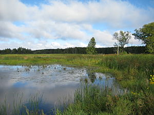 Father Hennepin State Park - Marsh off of Mille Lacs Lake