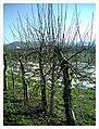 February Spring Homefleet-Cigogne arrived Southern Germany HABITAT - Magic Rhine Valley Photography 2013 - panoramio (8).jpg