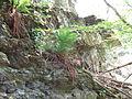 Felsen in der Dehl (Hoch-Weisel) 02.JPG