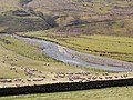 Field of sheep above the Hermitage Water - geograph.org.uk - 1251249.jpg