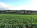 Fields - panoramio (29).jpg