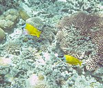 Fish 21 (22818598278).jpg
