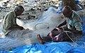 Fishermen mending nets (16708572753).jpg