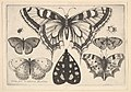 Five Butterflies, a Moth and Two Beetles MET DP823959.jpg