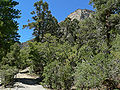 Fletcher Canyon trail 3.jpg