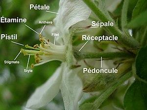 diverses piéces florales d'une fleurs
