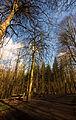 Flickr - Laenulfean - forest view.jpg