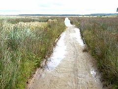 Flooded track across the marshes - geograph.org.uk - 226516.jpg