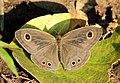 Flora and fauna of in Chinnar WLS Kerala IMG 6410.jpg