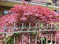 Flora of Esino Lario 11.jpg