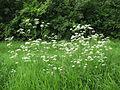 Flower 20 (6976524301).jpg