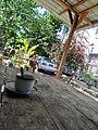 Flower Garden around Buildings.jpg