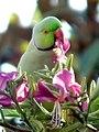 Flower Lover (5346937487).jpg