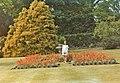 Flowerbed at Bicton Park, Devon - geograph.org.uk - 715088.jpg