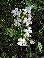 Flowers - Uncategorised Garden plants 142.JPG