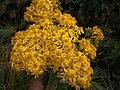 Flowers on Miran Jani Track - panoramio (1).jpg