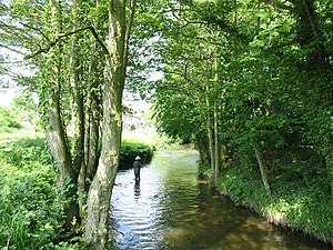Fly Fishing in Pickering Beck - geograph.org.uk - 183152.jpg
