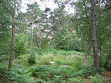 Fontainebleau 025.jpg