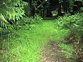 Fonthill Abbey Wood 2 - geograph.org.uk - 914374.jpg