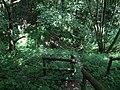 Footbridge in Dirty Dingle - geograph.org.uk - 911976.jpg