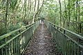 Footbridge in Woods - geograph.org.uk - 1001402.jpg