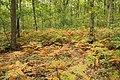 Forêt Départementale de Méridon à Chevreuse le 29 septembre 2017 - 18.jpg