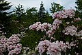Forest-trees-flowers - West Virginia - ForestWander.jpg
