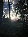 Forest shine.jpg