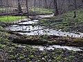 Forest spring - panoramio.jpg