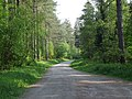 Forest track in Newborough Forest - geograph.org.uk - 177025.jpg