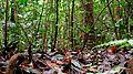 Forest understory Sirsi.jpg