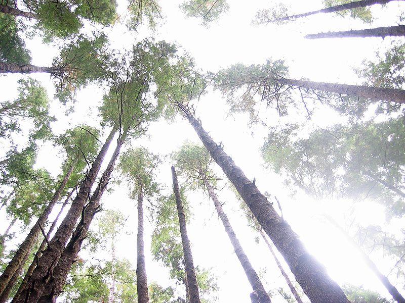 Tập tin:Forest up.jpg