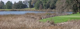 Fountaingrove Lake - View of marshy perimeter of southern Fountaingrove Lake, with Great egret in evidence and a small element of the golf course.