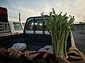 Fresh rhubarb (rewas) for sale in springtime in Ruvia (near Bardarash) 02.jpg