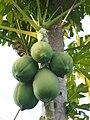 Fruit9.jpg